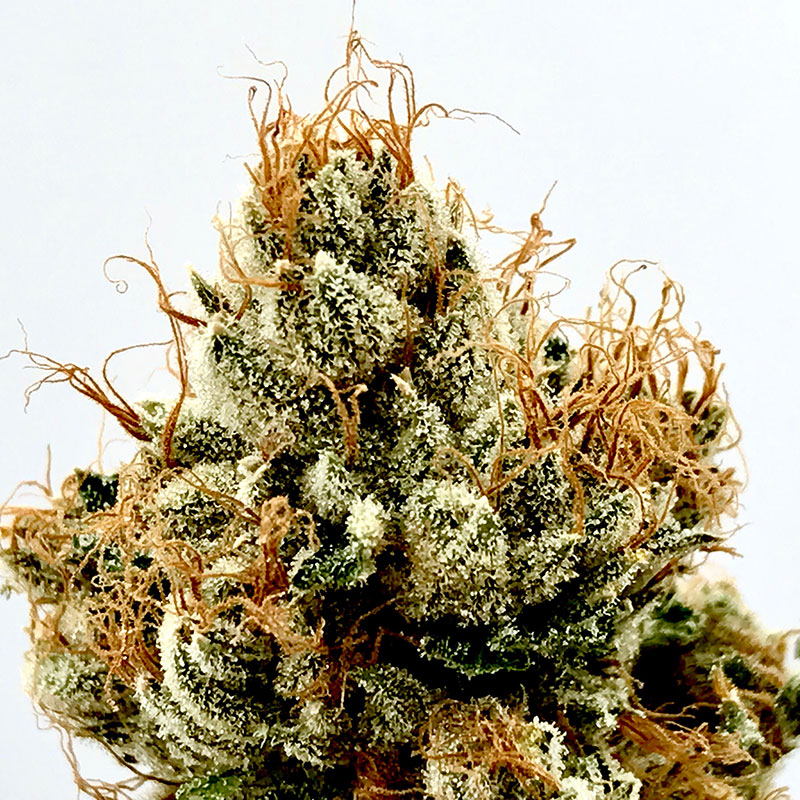 The OG Story (Indica) - Powered by Cali Kush Farms